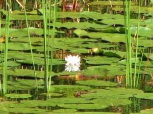 Всемирный день водно-болотных угодий