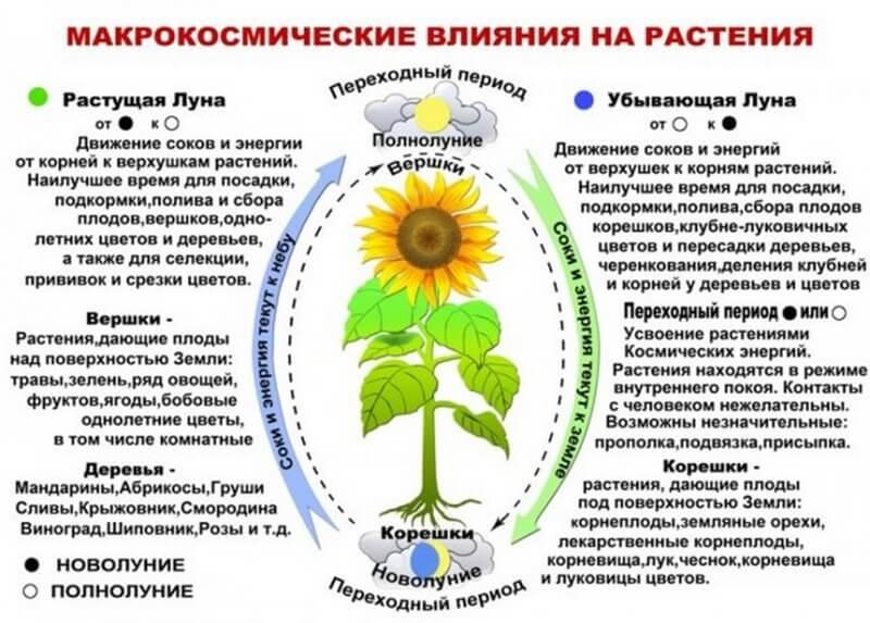 Схема влияния Луны на растения